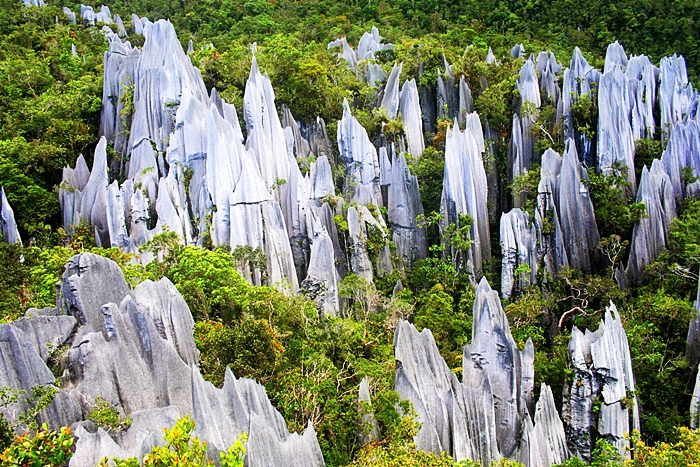 Mulu Pinnacles at Gunung Mulu National Park, Sarawak Borneo
